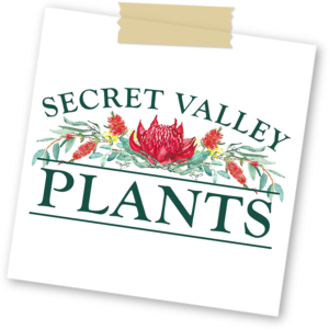 Secret Valley Plants harbourside markets